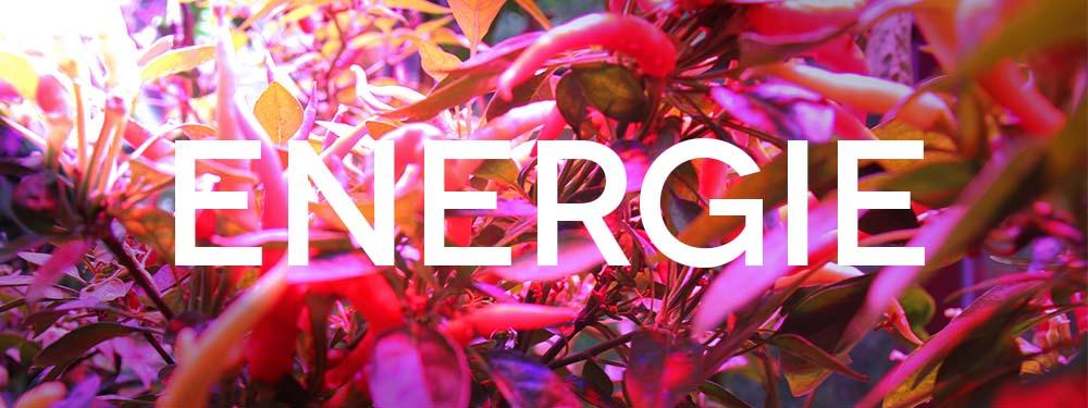Horticoled - ENERGIE