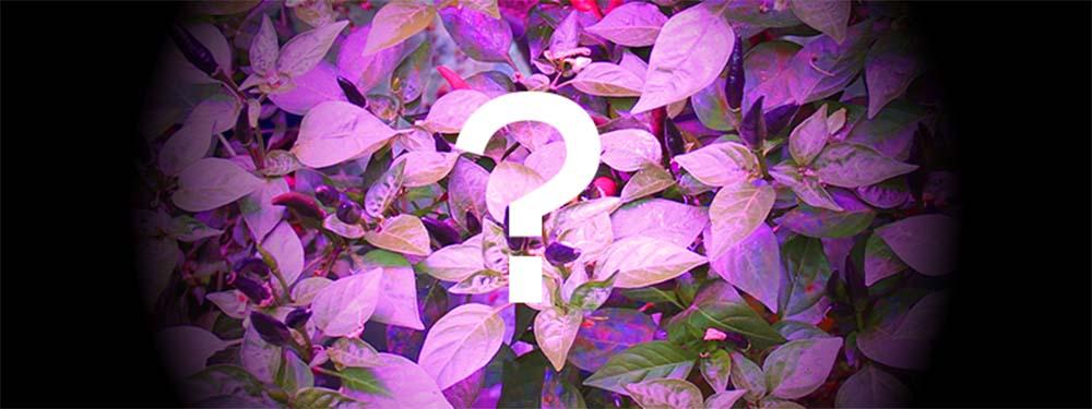 Horticoled - Lumière violette 1000