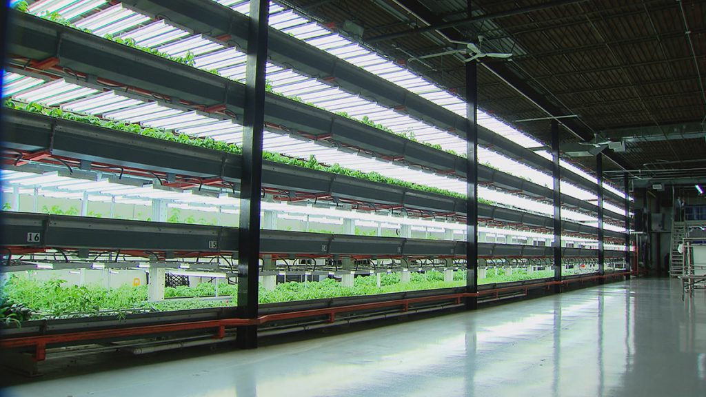 Vertical Farming Commercial Exploitation Enlighted By Leds